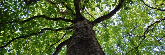 Bomen en planten kopen