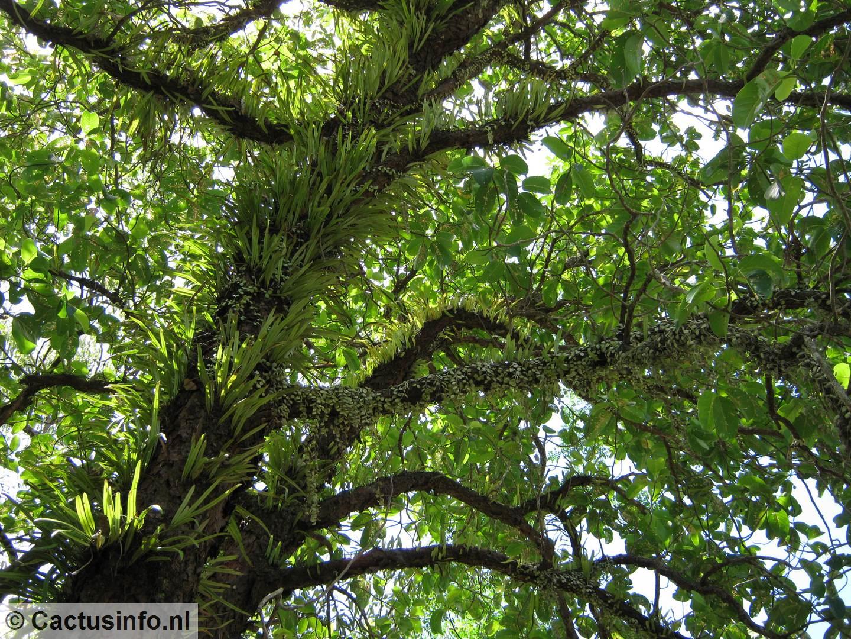 Parasolboom In Tuin : Bomen in de tuin u j van de wiel