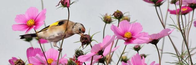 Meer vogels in de tuin? Twee keer negen tips