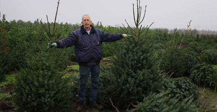 Kerstbomen bezorging